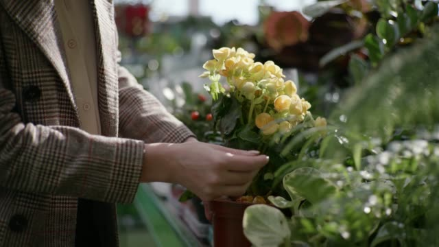 gardening, a woman inspects decorative blooming home flowers in pots on the shelves of a flower grocery store background of green plants, hands close up - direttrice video stock e b–roll