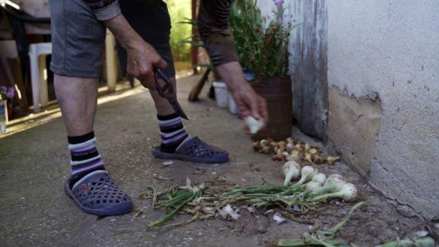 vídeos de stock, filmes e b-roll de jardinagem, agricultura. pessoa sênior que limpa as cebolas do jardim vegetal para prepará-los para o inverno. - estilo de vida dos abastados