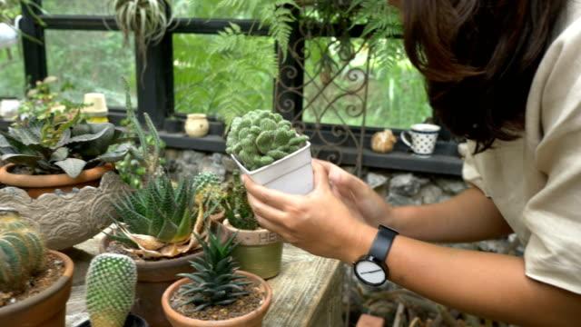 Gardening Cactus Gardening Cactus plant nursery stock videos & royalty-free footage