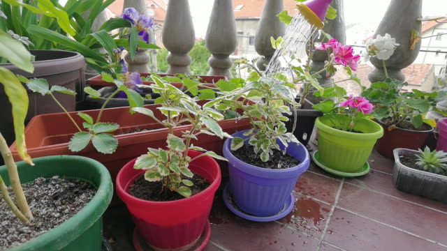 Gardening in house video