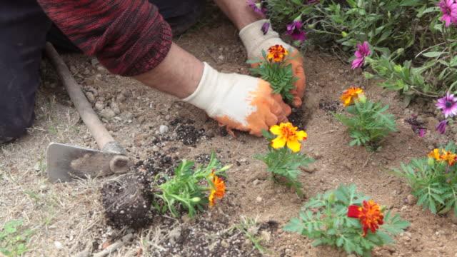 Gardening in spring video