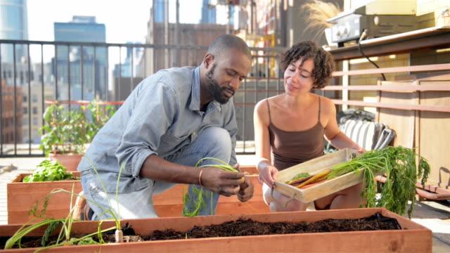 gartenarbeit auf la dach - dolly schuss - urban gardening stock-videos und b-roll-filmmaterial