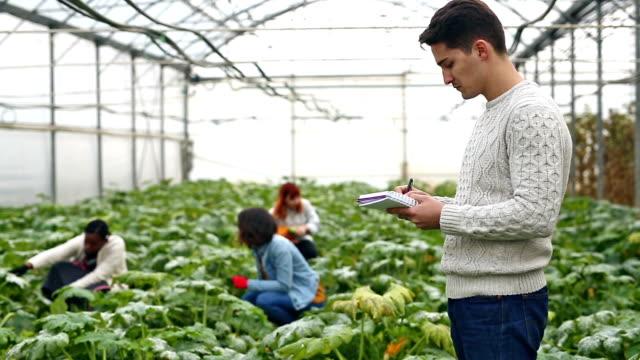 vídeos de stock, filmes e b-roll de pesquisas de jardinagem - estilo de vida dos abastados