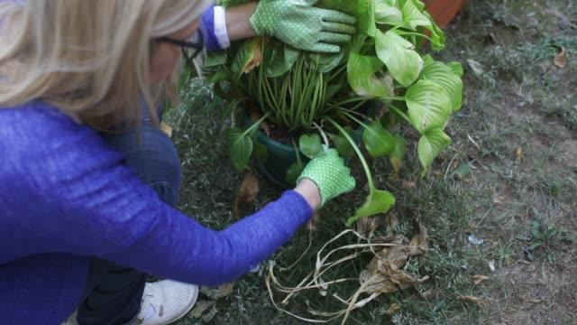 vídeos y material grabado en eventos de stock de jardinería - tiesto