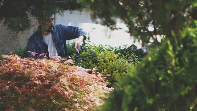 vidéos et rushes de jardinage - un seul homme d'âge mûr