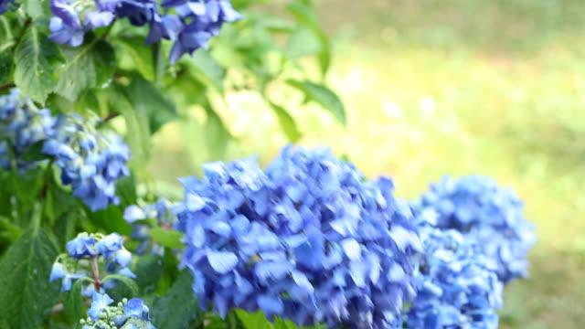 gardening: watering video