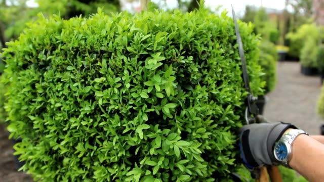 gardening/trimming - bahçe ekipmanları stok videoları ve detay görüntü çekimi