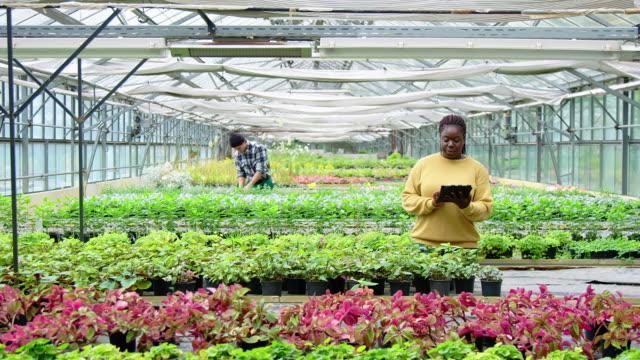 gardner working in a plant nursery - gospodarstwo ekologiczne filmów i materiałów b-roll
