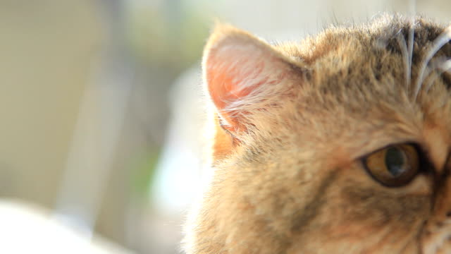 Garfield,close-up video