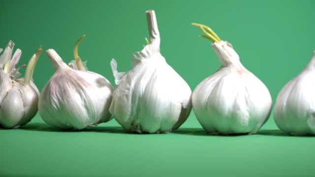 Garlic. Garlic on a green background video
