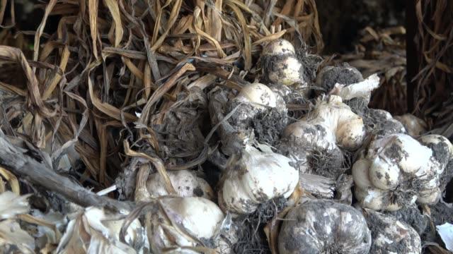 garlic white onion - aglio cipolla isolated video stock e b–roll