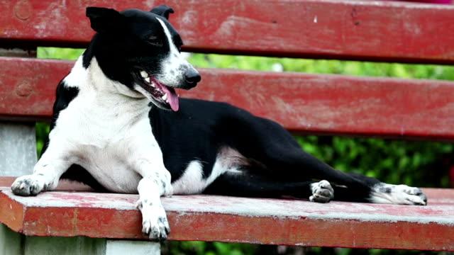 Cão ofegante e sentando-se no banco de parque - vídeo