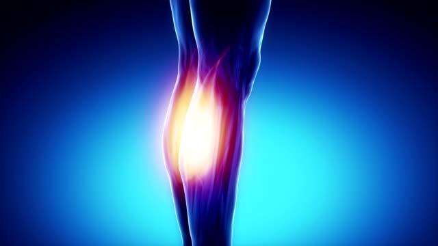 zweiköpfiger wadenmuskel-muskeln anatomie muskeln-karte mit - gliedmaßen körperteile stock-videos und b-roll-filmmaterial