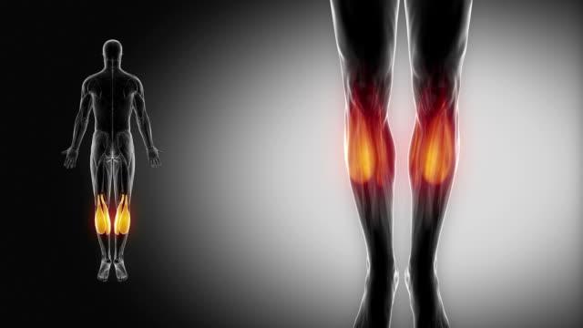 腓腹筋-筋肉部位の筋肉のマップ - 人の筋肉点の映像素材/bロール