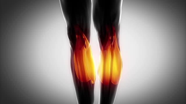 zweiköpfiger wadenmuskel-muskeln anatomie in schwarz - gliedmaßen körperteile stock-videos und b-roll-filmmaterial