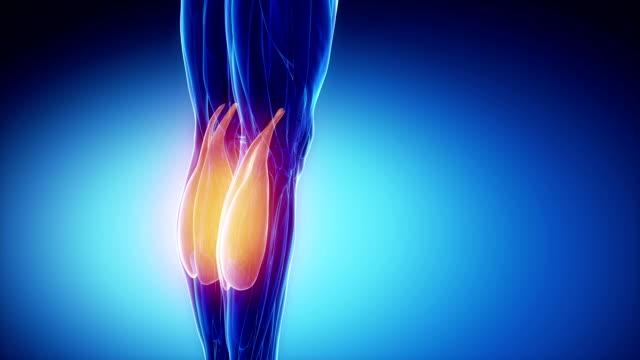腓腹筋-筋肉部位のディテール - 人の筋肉点の映像素材/bロール