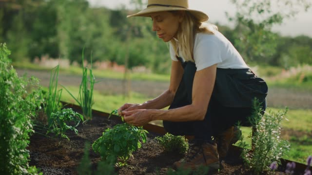 gathering herbs for dinner - gardening stock videos & royalty-free footage