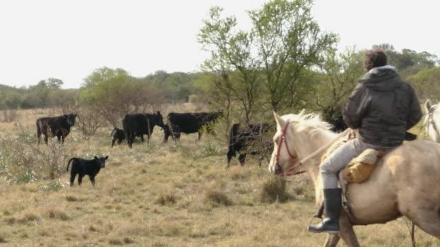 2 gauchos en argentina santa fe viendo las vacas - vídeo