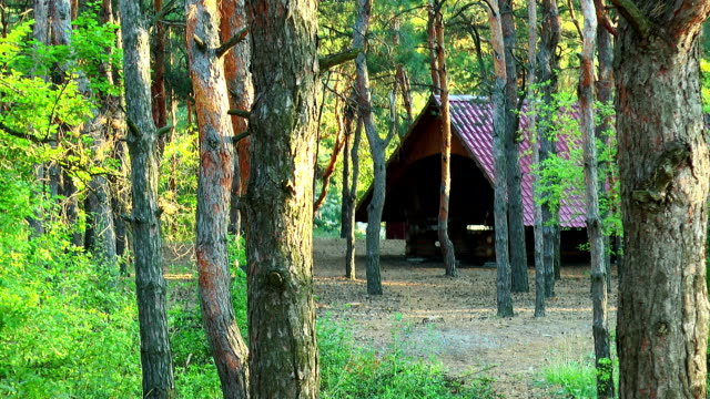 Gazebo in the pine forest video