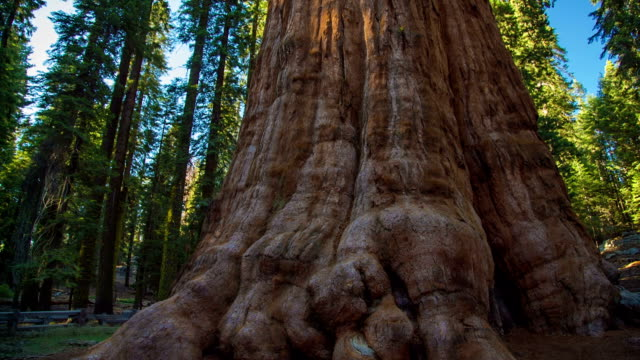 General Sherman Tree video