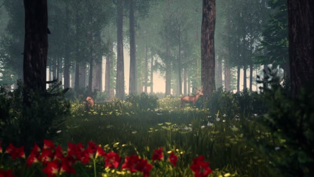 generative forest - jeleniowate filmów i materiałów b-roll