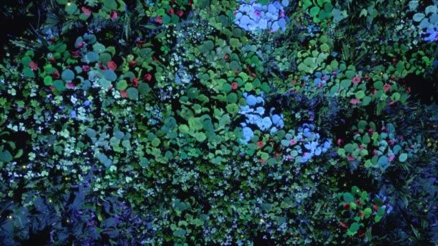 vídeos y material grabado en eventos de stock de plantas generativas - organismo vivo