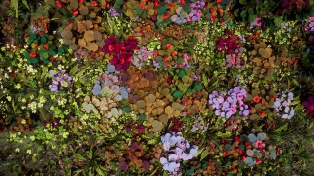 generativa växter - lummig växtlighet bildbanksvideor och videomaterial från bakom kulisserna