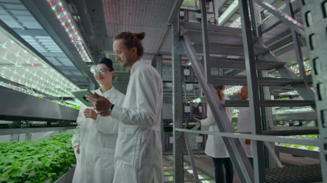 Genetic engineering. Doctors in white coats look and adjust the work of the vertical farm checking the plants and looking into the screens of tablets.
