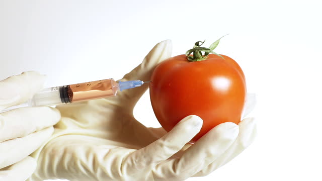 HD: Genetically Modified Tomato video