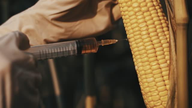 SLO MO Genetically modifying the corn video