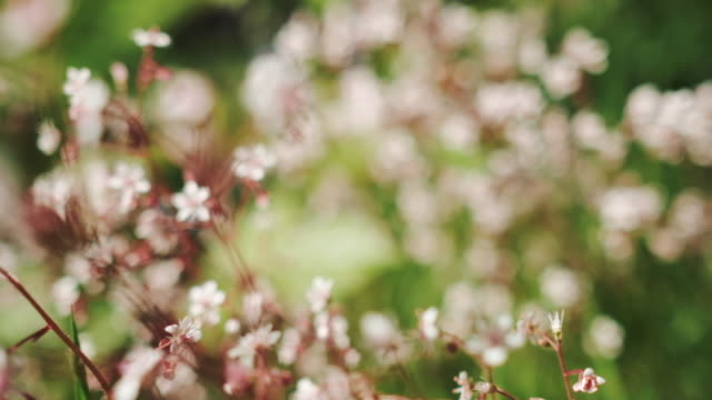 Gentle 5 X slow motion movement through pink flowers, shallow focus. video