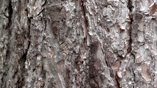 Gentle downward inclination along the bark of a jaw, abstract as background, pattern or texture