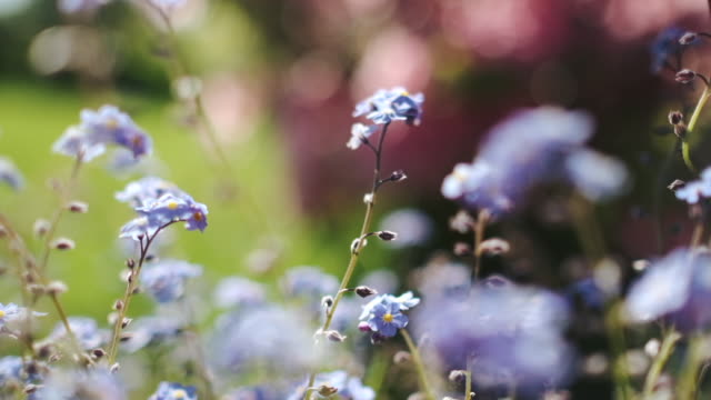 Gentle slow motion pan through small flowers, shallow focus. video