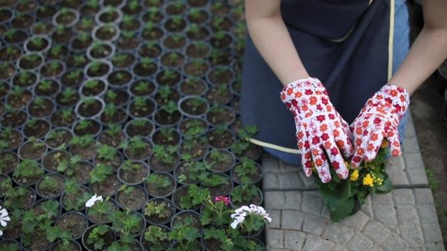 vídeos de stock e filmes b-roll de gentle with flowers - avental