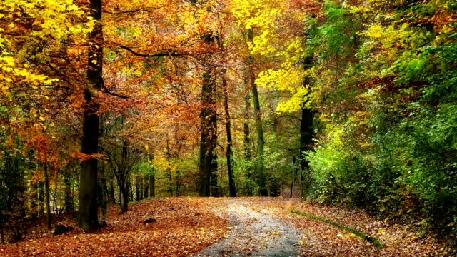 Gently moving through autumn forest scenery