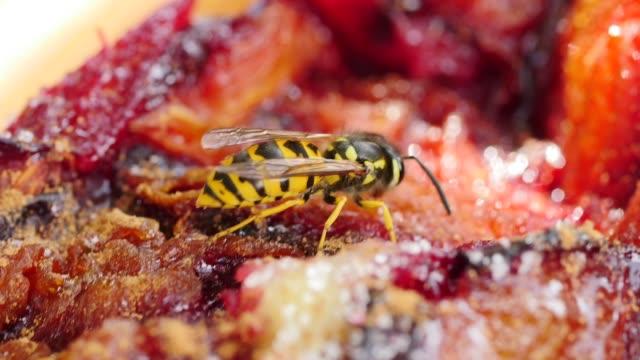deutsche wespe ernährt sich von pflaumenkuchen - wespe stock-videos und b-roll-filmmaterial