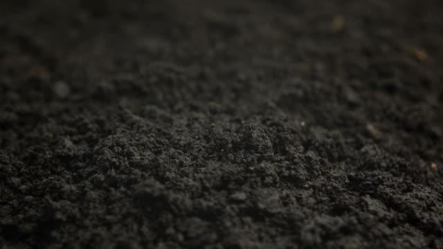 発芽豆プロセス - 苗点の映像素材/bロール