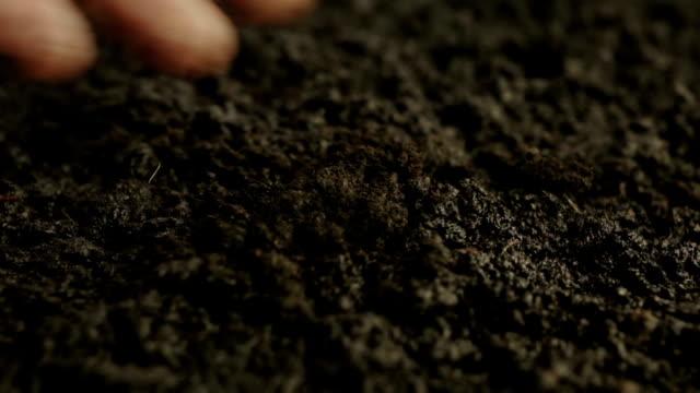 germinating plant process - pea sprouts bildbanksvideor och videomaterial från bakom kulisserna