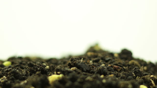 Germinating Plants video