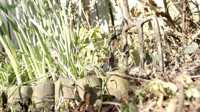 Get Ready As Its Time For Weeding The Garden video