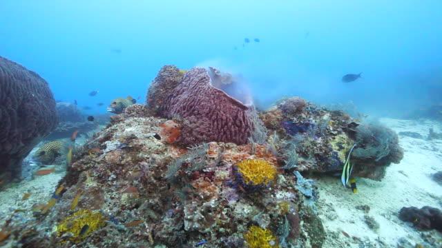 giant barrel sponge - sud est asiatico video stock e b–roll