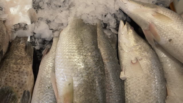 Giant Perch for Sale at Fish Market