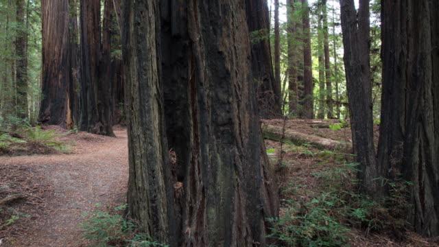 巨型紅杉林 - 州立公園 個影片檔及 b 捲影像