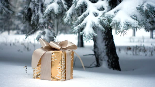 gift box on a snow under the fir tree during the snowfall
