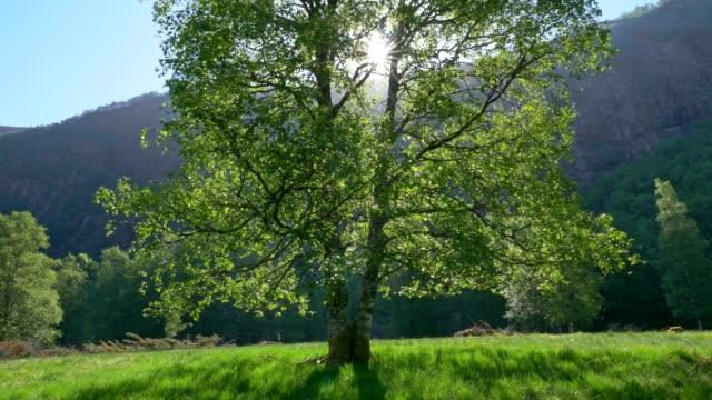 gimbal shot of green sunner tree and sun rays breaking through green leaves. uhd, 4k - obszar zadrzewiony filmów i materiałów b-roll
