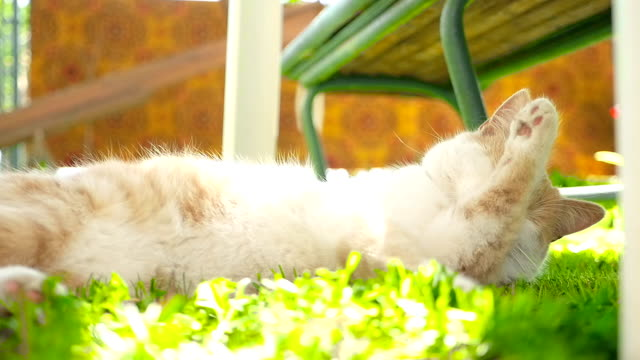 A ginger cat on a green lawn HD video
