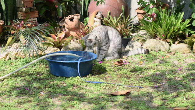 Ginger cat playing water from hose in green garden