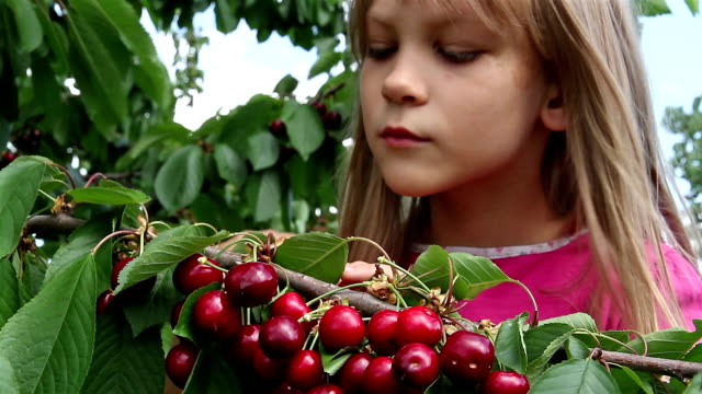 Girl and a cherry The girl plucks berries with cherry branches and eats cherry stock videos & royalty-free footage