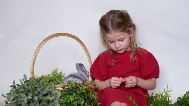 Girl and rabbit in basket with grass. Easter game child and pet. Animal at home.