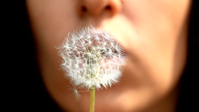 Girl Blowing On a Dandelion video